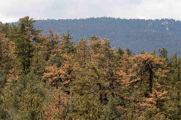 Weyerhaeuser to Buy Plum Creek, Create the World's Premier Timber, Land and Forest Products Company